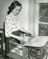 1949 Sharon Wallace, Student Teacher