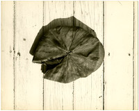 View from above of torn cloth cap laying on wood deck