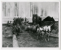 Eighteen men sit on massive logs in a logging camp with six horses hitched to pull one of the logs