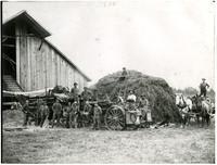 Workers gather around steam-powered threshing machine and large pile of hay