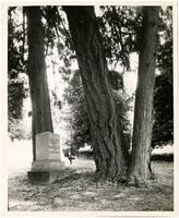 Gravestone of James Tilton Pickett in River View Cemetery, Portland, Oregon