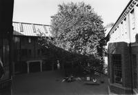 2000 Miller Hall: Courtyard