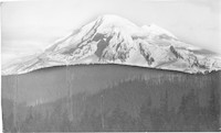 Snow-covered, glaciated Mount Baker, rising from the tree-covered foothills