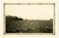 A field of row crop with farm buildings in distance