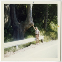 Elderly Deane Hook stands on side of Chuckanut Drive with hand on y-shaped tree, commemorating a photo taken of him in same tree in 1915