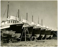 Six fishing boats with Pacific American Fisheries insignia in a line in dry dock