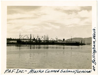 Cannery steamer ships docked at Bellingham' south terminal
