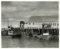 Fishing vessels of various sizes moored at cannery dock with warehouse