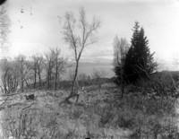 Unidentified landscape