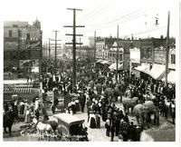 Approximately a dozen elephants parade down Holly street, Bellingham,WA, as part of circus parade, with crowds lining the streets