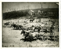Six teams of horses with wagons carrying logs or debris stand on cleared land with several buildings in background, deforested land on hill beyond