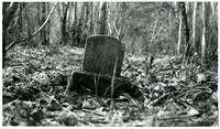 Leaning gravestone of Lauris Larson in overgrown cemetery