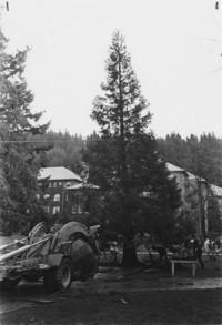 1969 Tree Move