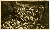 Workers brail a load of salmon into a holding scow from a fishtrap