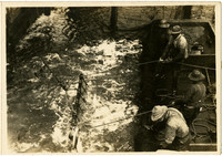 Men work to gather fish-filled trap into barge.