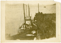 Cannery tender pulled alongside a barge provides fish being offloaded onto conveyor belt