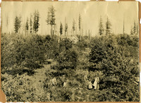 A family stands in an orchard with a farmhouse visible over the treetops, and a few tall fir trees in the background