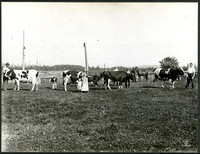 Five men, a woman and a child standing in a pasture with four cows and a calf, mostly Holsteins, and one horse.