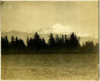 View from wheat field of snowy peak - possibly Mount Baker - on horizon with forest in middle distance