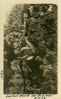 Lower Baker River dam construction 1925-08-03 Curled Hook on Hi-Lines