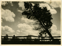Leaning tree and fence silhouetted against cloudy sky