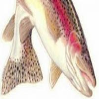 Fly Fishing Oral Histories