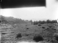 Meadow at timberline on the northwest side of Mt. Adams