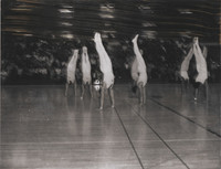 1967 Danish Gymnastic Team
