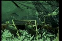 Tikka (Rubin) Film Footage of Clam Gulch, Alaska