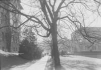 1935 Memory Walk