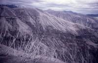 Close-up view of blast-seared ridge.