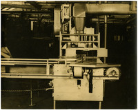 Salmon processing or canning machine with conveyor belt