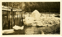 Iceburg trap - small iceburgs next to fishing nets draped from docks at Excursion Inlet