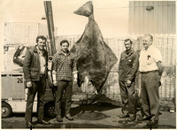 Four men pose next to huge halibut hung from forklift with fishtraps stacked in background