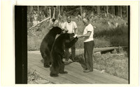 Feeding the bears at Kasaan