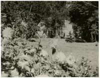 Large house seen beyond large lawn and trees, with dahlias in immediate foreground