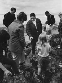 1980 Tide Pool Critters