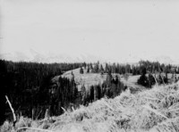 View across partially-forested hillside with trees towards unidentified mountain range.