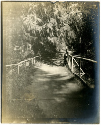 Pathway, possibly in Whatcom Falls Park
