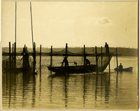 Several small boats and with fishermen maneuver around fishtraps, working the nets