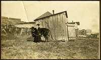 Clara Hewitt and cow, So. Bellingham
