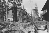 1974 Birnam Wood
