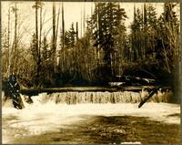 Unidentified forest scene.