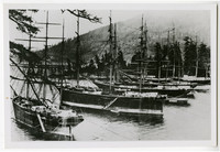 At least six three-masted ships of Pacific Packing Company Cannery Square-Riggers anchor in Pleasant Bay near Bellingham, WA, with forested hills in backgorund