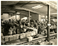 Boston-Okanogan Apple Co. Interior of packing shed