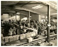 Boston-Okanogan Apple Co. Interior of packing shed