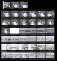 1971 Penn Cove Orca Whale Capture (Contact Sheet)