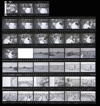 1971 Penn Cove Orca Whale Capture (Contact Sheet)